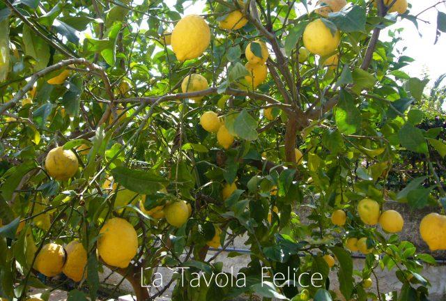 レモン イタリア