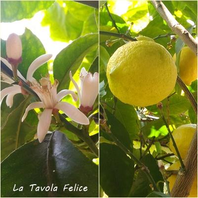 2017.4 limone